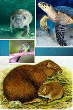 The Ana Maria Keys Wildlife Refuge:  A hidden treasure in central Cuba's southern coast